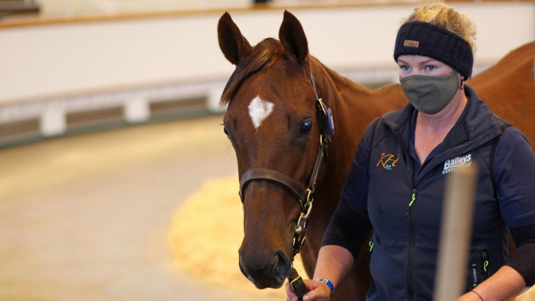 The Churchill filly out of Purple Glow sells to Joe Foley for 130,000gns