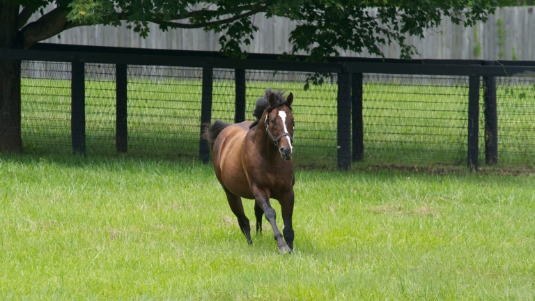 War Front in his paddock at Clairborne Farm