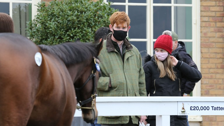 Conor Quirke and Kathryn Birch observe a yearling in the Tattersalls parade ring