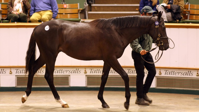 Lot 1,923: the Authorized colt sells to Alex Elliott for 90,000gns