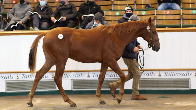 Lot 1,839: the Night of Thunder colt out of Moonstone Rock brings 46,000gns from Rabbah Bloodstock