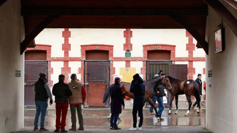 Arqana's Autumn event will take place over four sessions