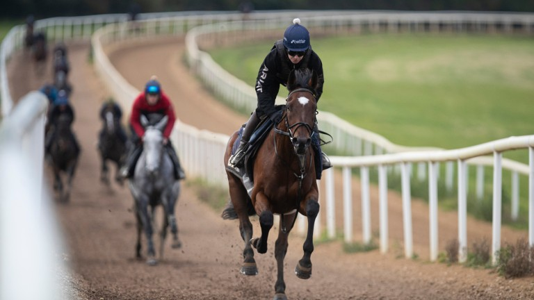 Cheltenham could be Tiger Roll's next port of call