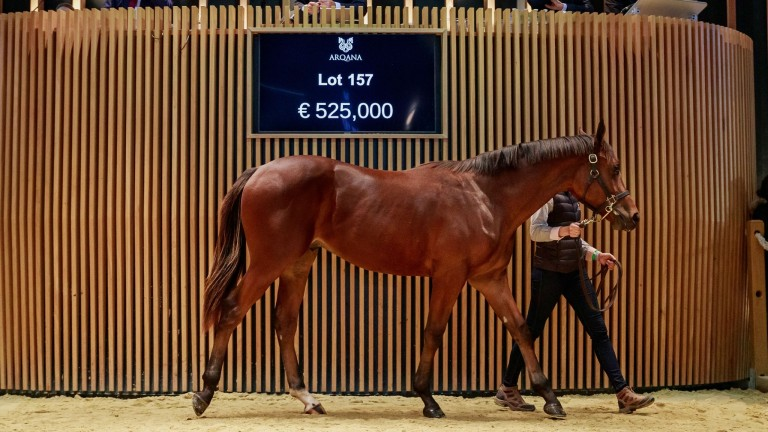 Lot 157: Ecurie Monceaux's Siyouni colt out of Prudente, is knocked down to Al Shaqab Racing for €525,000 on the opening day of Arqana's October Yearling Sale.