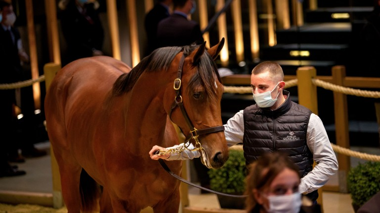 David Menuisier goes to €210,000 to secure Ecurie Monceaux's Siyouni half-brother to Group winner Paix