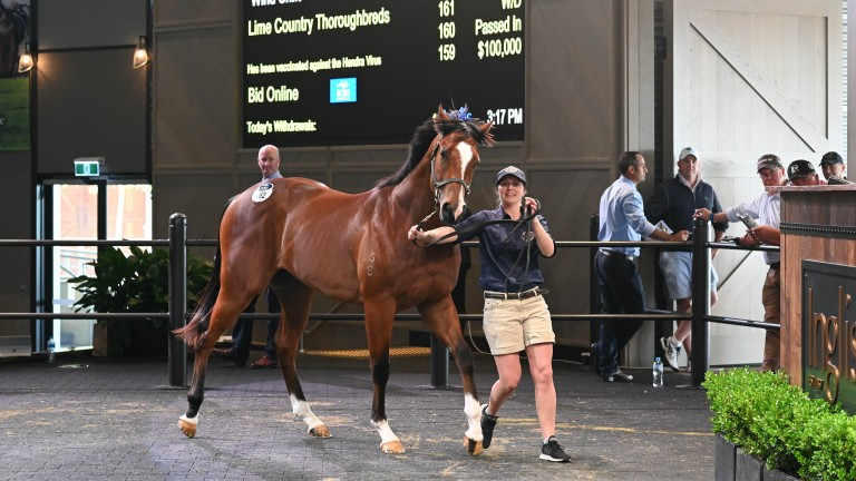 The Deep Field colt who topped trade at A$610,000 (£329,000/€360,000)