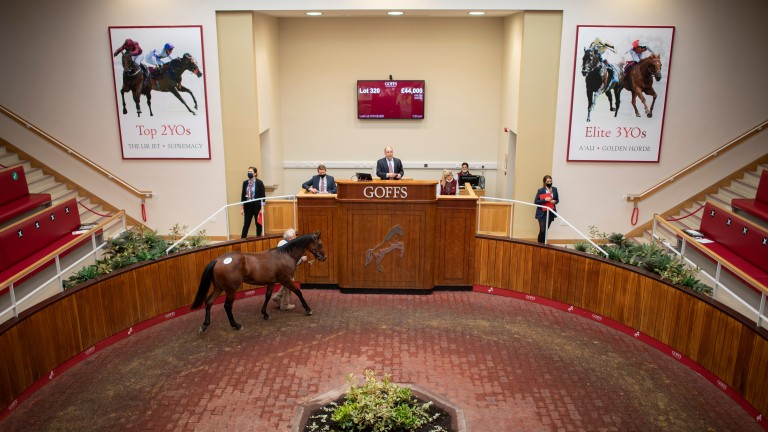 Goffs UK: the Doncaster auction ring will host the Autumn Sale on Thursday