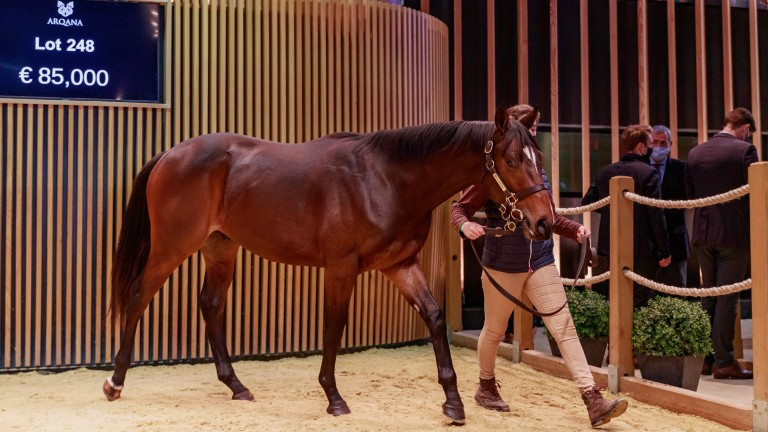 Tuesday's Arqana top lot was an €85,000 son of Adlerflug bred by Haras de Bourgeauville