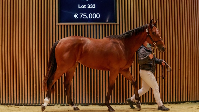 Al Shaqab struck at €75,000 for a daughter of record-breaking first season sire Mehmas