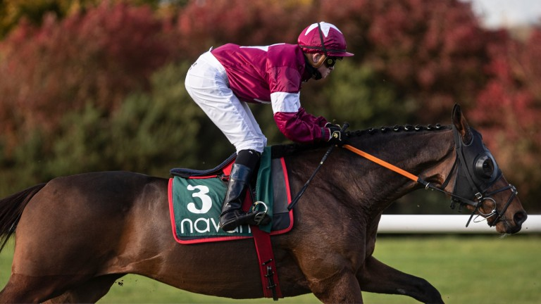 Tiger Roll and Sam Ewing finished sixth in the 1m6f maiden at Navan