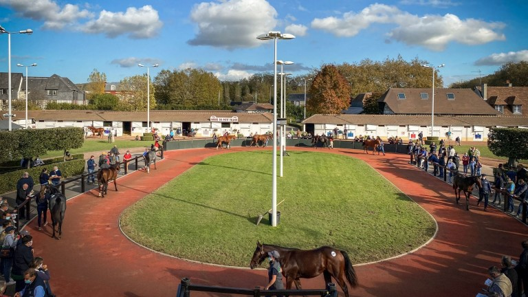 Yearlings take a walk ahead of going under the hammer at Arqana's October Yearling Sale