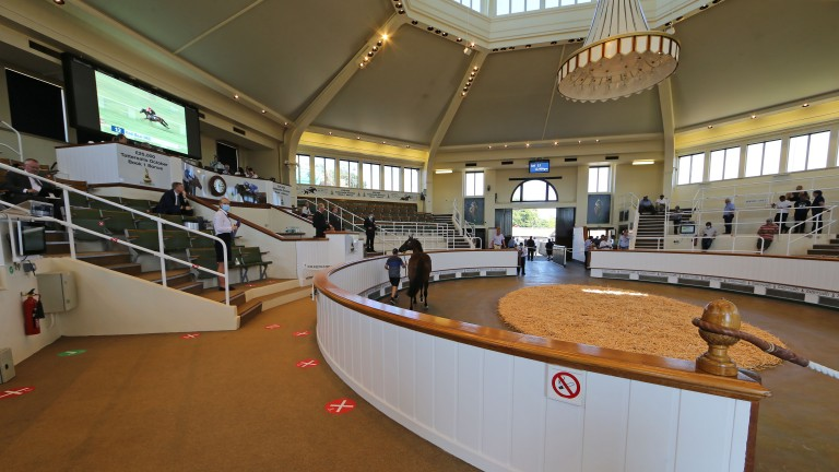 The Park Paddocks sales ring ahead of the Craven Breeze Up Sale in April