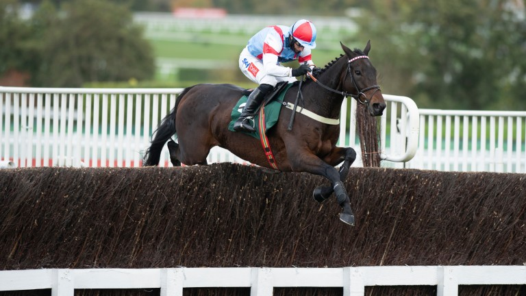 Rouge Vif: bolted up on his reappearance at Cheltenham