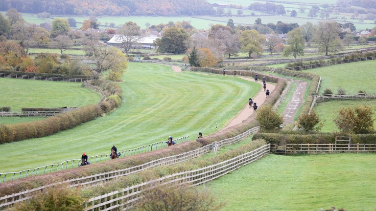 Horses on the gallops at Mark Johnston's Yorkshire base. Trainers have been explaining what happens to their horses at the end of their racing careers