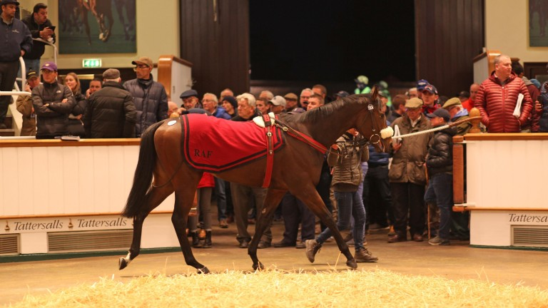 Summer Sands tops the 2019 Tattersalls Autumn Horses in Training Sale when bought by Joseph O'Brien for 625,000gns