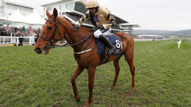 Yorkhill pictured after winning the JLT Novices' Chase in 2017