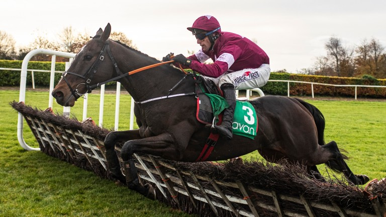 Abacadabras: one of two in Champion Hurdle for Denise Foster