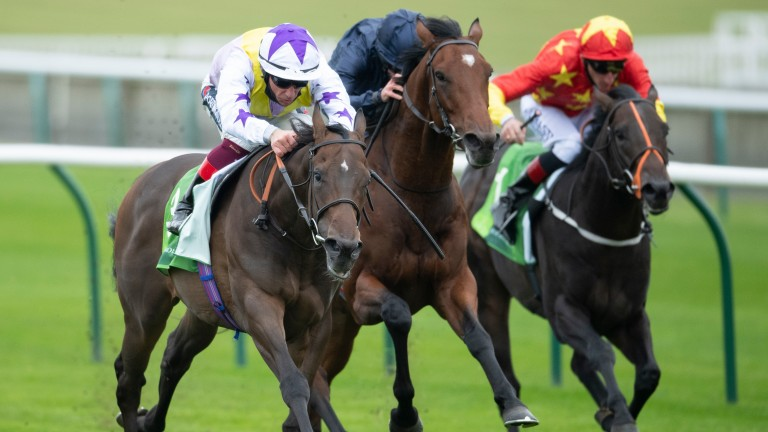 New Mandate (left) is attempting to give sire New Bay a first top-level victory