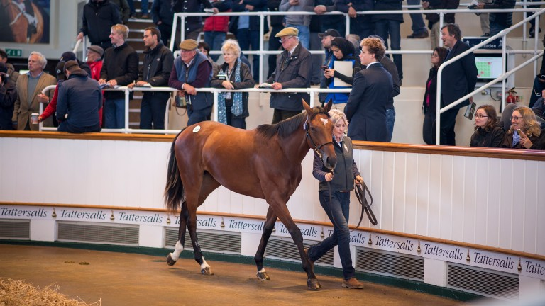 Maria Danilova in the Tattersalls ring, where she fetched 4,000,000gns