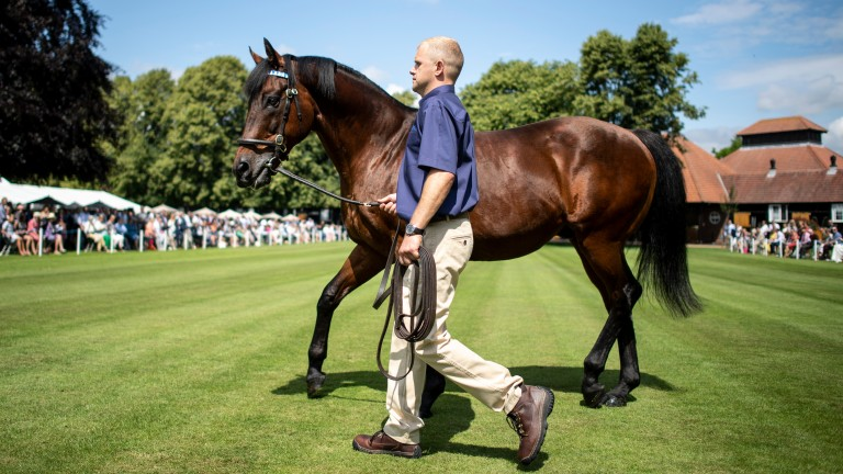 Dubawi: Dalham Hall Stud kingpin covered 31 Galileo mares among a book of 155 in 2020