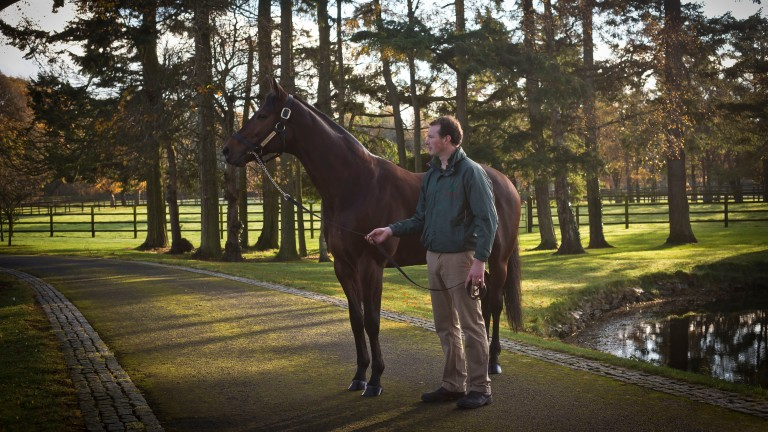 Sea The Stars: Gilltown Stud resident among 17 sires who covered over 200 mares in 2020