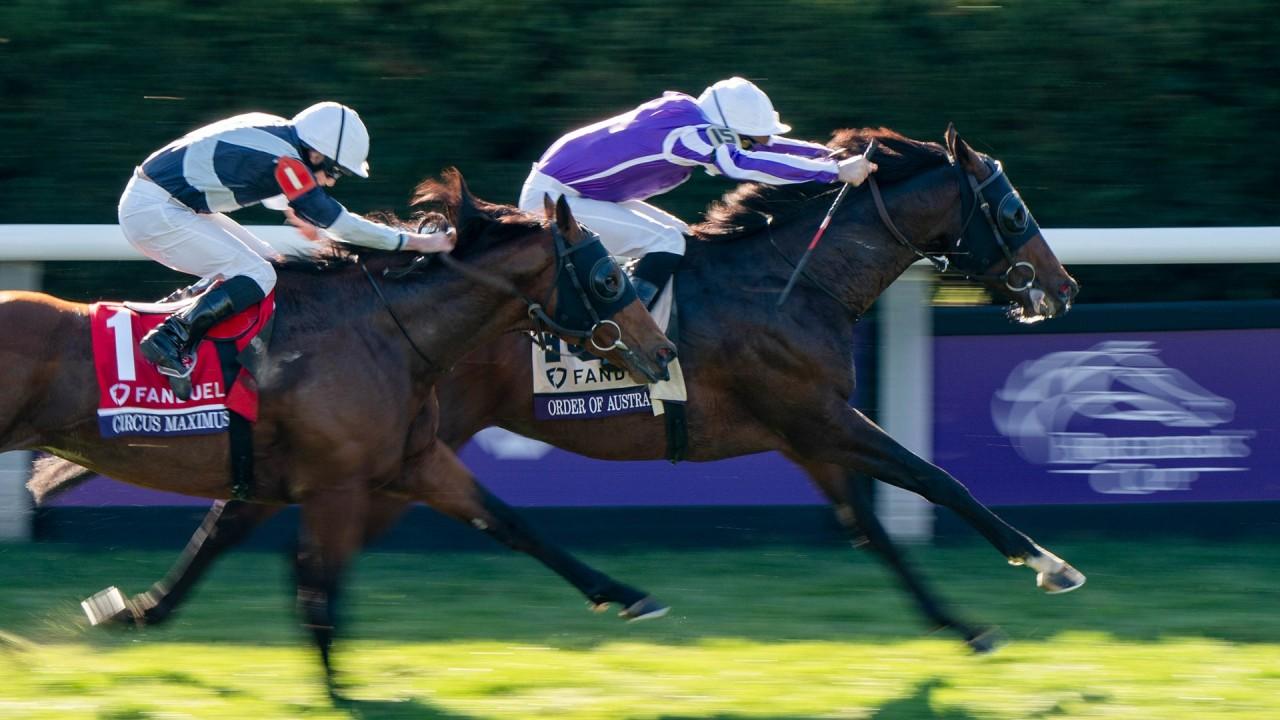 Horse racing betting terms australia news spread betting ftse 100 history