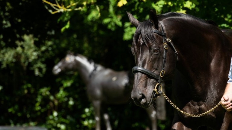 Wootton Bassett takes in his new surroundings at Coolmore
