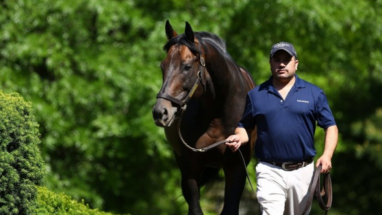Uncle Mo: Coolmore's US resident is an emerging sire of sires