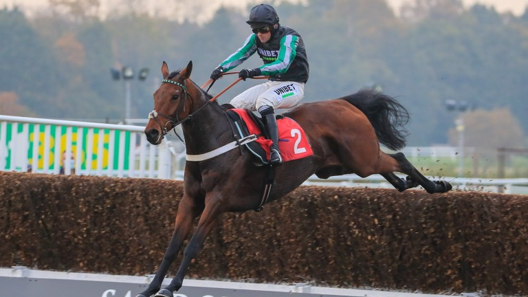 Pym: Listed-winning chaser is offered for sale by Nicky Henderson