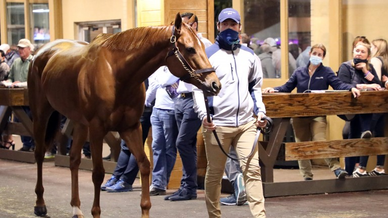 Monomoy Girl sold for $9.5 million but is expected to remain in training
