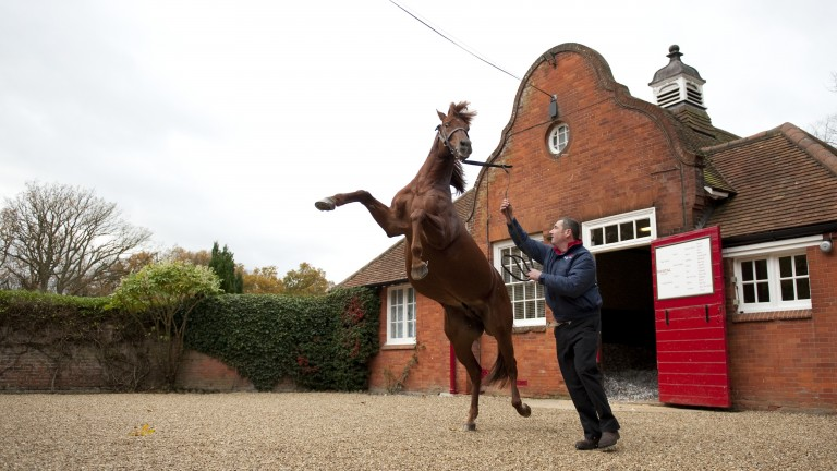 Pivotal puts on a show at Cheveley Park Stud
