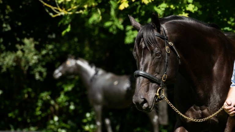 Wootton Bassett: Coolmore have introduced the rising star stallion at a career-high fee