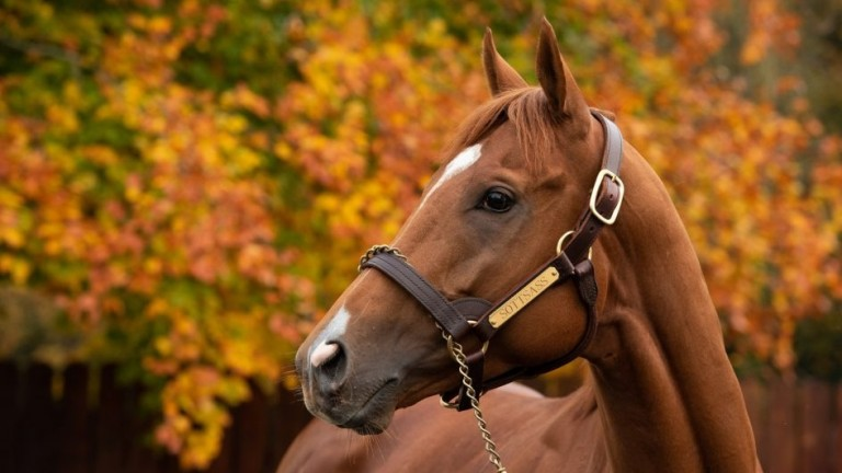 Arc hero Sottsass takes in his new surroundings at Coolmore