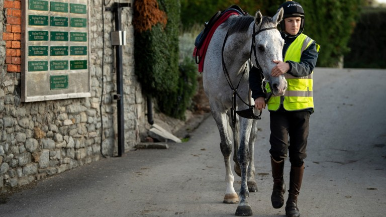 """Politologue and Harry Derham: """"He's one of the horses I'm most fond of,"""" said Paul Nicholls' assistant trainer"""
