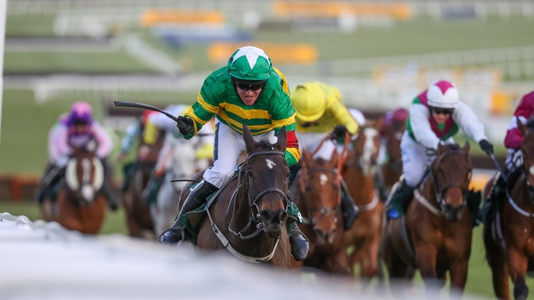 Last year's County Hurdle hero Saint Roi has been ruled out of the Champion Hurdle