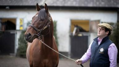 Micheál Orlandi with Compas Stallions' Smooth Daddy