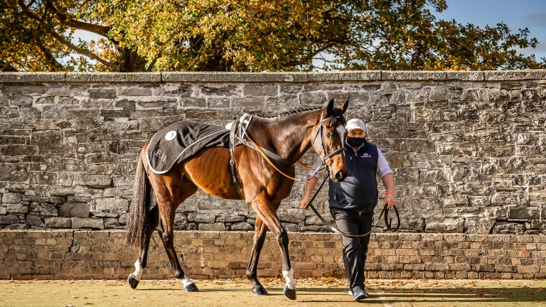 Patrick McCarthy leads up Jonbon, a full-brother to Douvan, at Yorton Farm