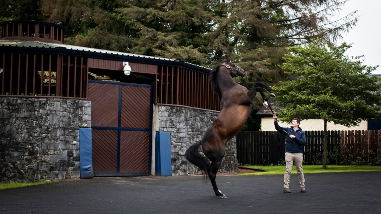 Camelot: heir to the Montjeu sire line has had his fee increased to €45,000
