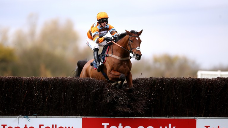 Master Tommytucker: leading player in Saturday's Ascot Chase