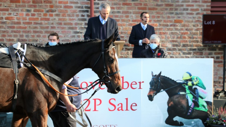 Jonbon: broke the previous record price for a pointer sold at public auction