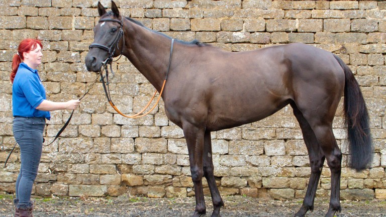 Musical Stardust: the final foal out of Royal Musical and a dual hurdles winner for Alex Hales