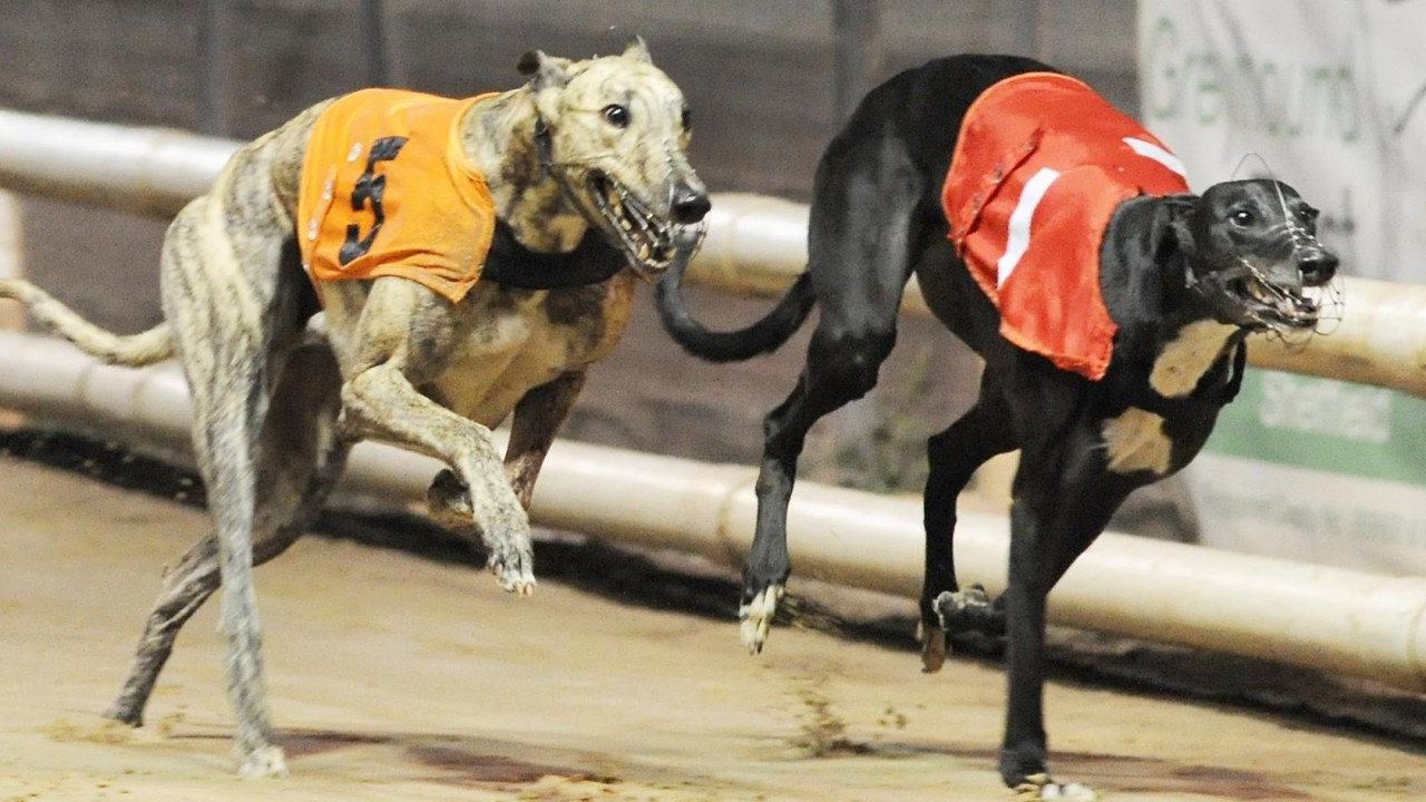 Racing post betting site greyhounds and cats bankroll management betting sports for dummies