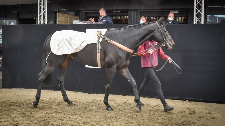Tax For Max (lot 423) will be heading to Ireland after making €200,000 at Arqana