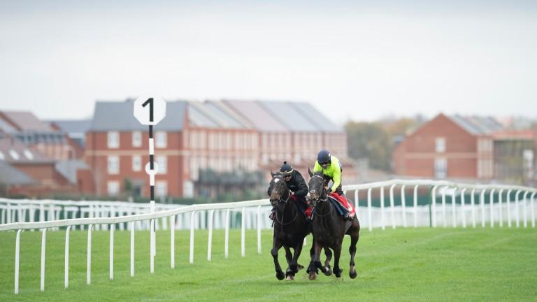 Santini (left) gallops with Beware The Bear