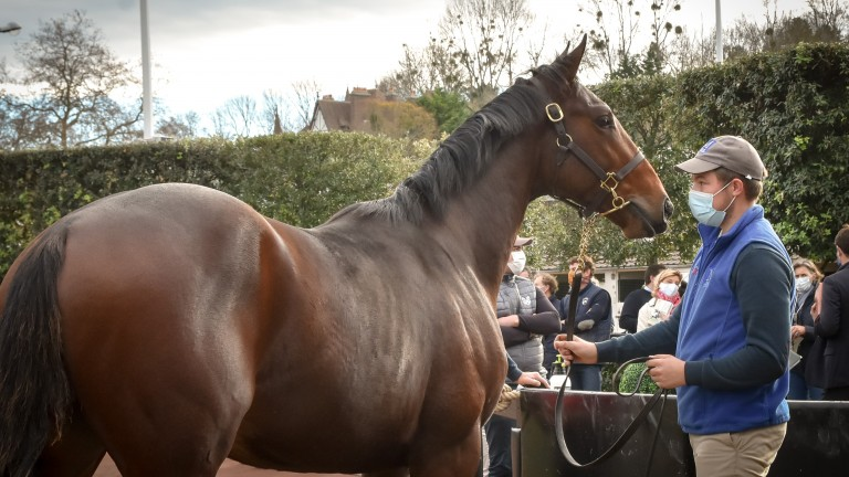 Part Exit, a yearling son of Martaline, was sold to agent Bertrand Le Metayer at Arqana on Wednesday for €87,000