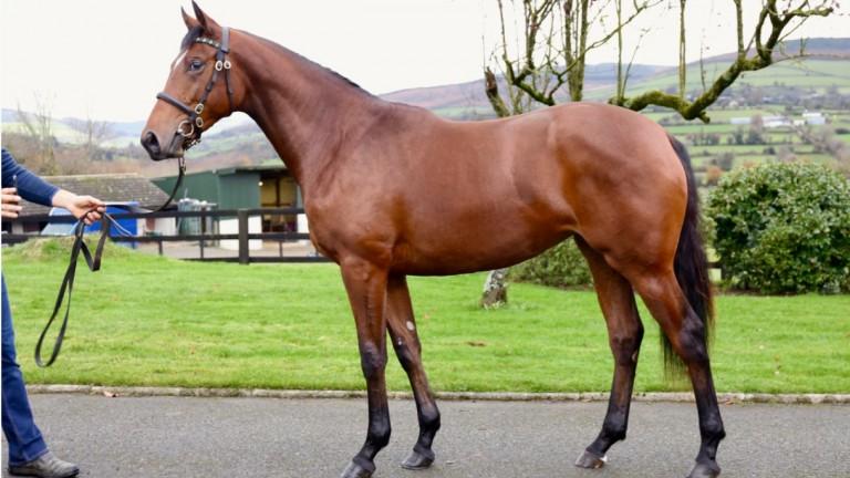 The Zoffany filly who led the way at €33,000