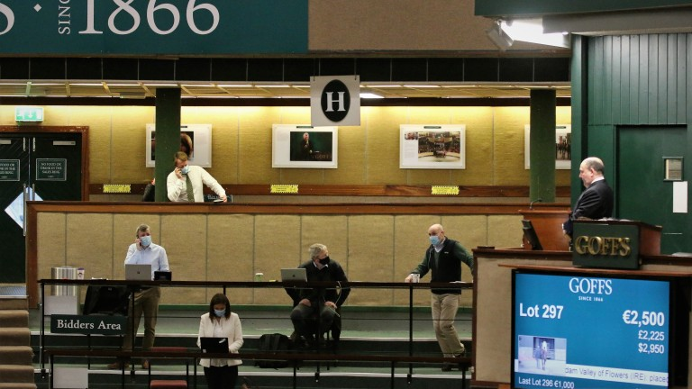 Goffs had a very different look this week with no actual bidders present