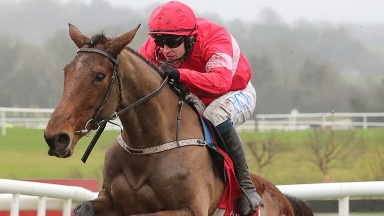 Laurina: first start for Paul Nicholls at Ascot on Saturday