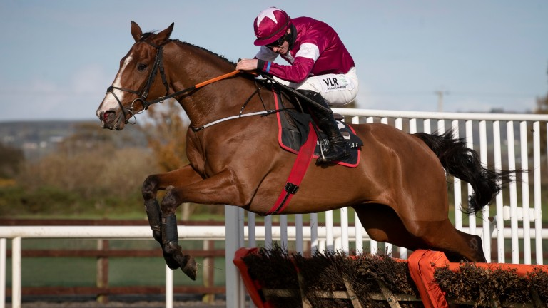 Farouk D'Alene: the hugely exciting novice hurdler puts his unbeaten record on the line at Navan