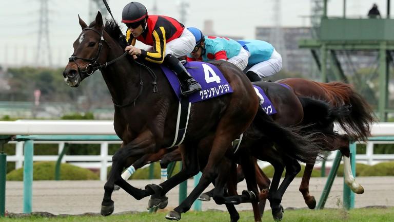 Gran Alegria: an authoritative winner at Hanshin on Saturday